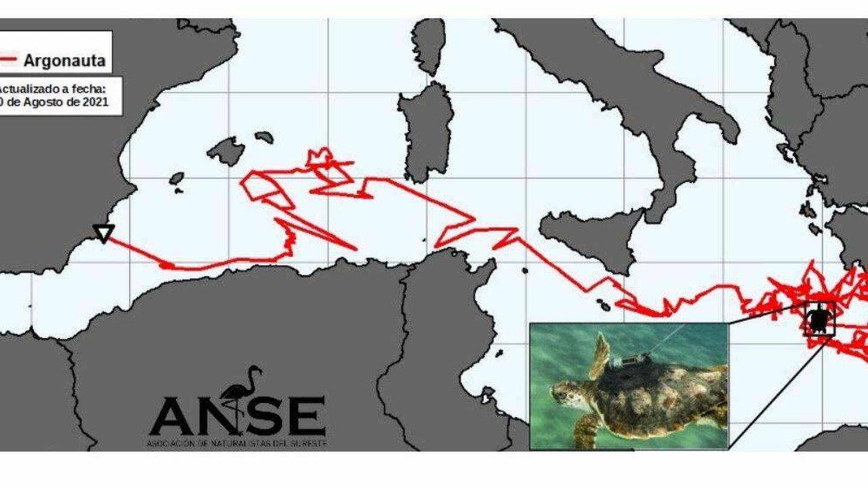 Ruta de desplazamiento de Argonauta. (ANSE)