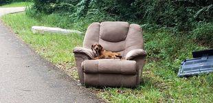 Post de Abandonan a un cachorro en su sofá en mitad de una carretera desierta