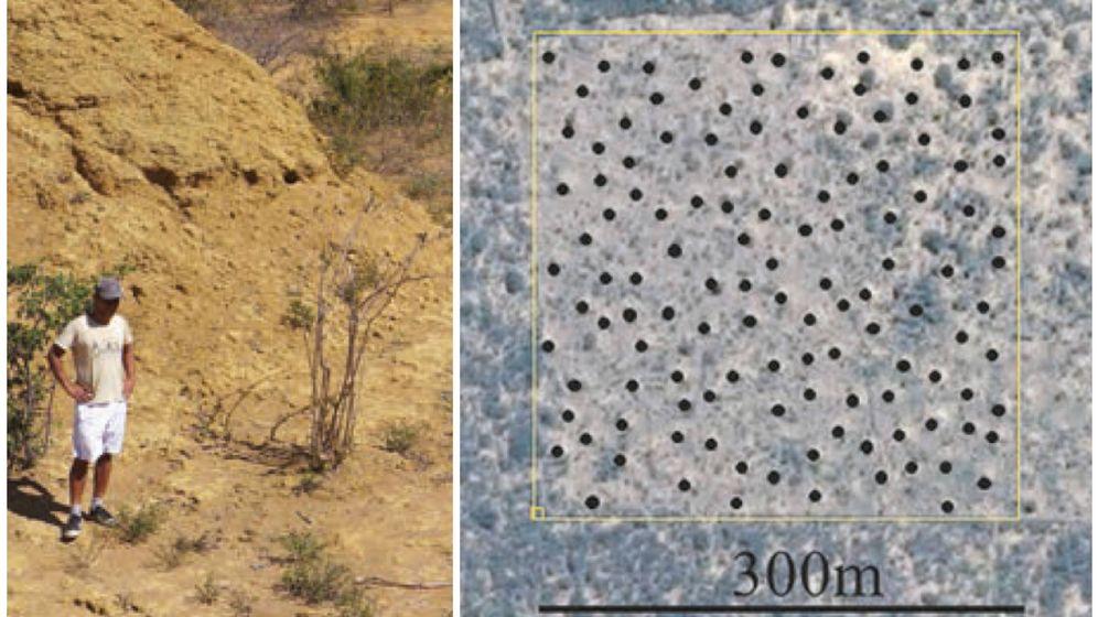 Foto: Hallan en Brasil una mega ciudad de termitas. (Current Biology - RF)