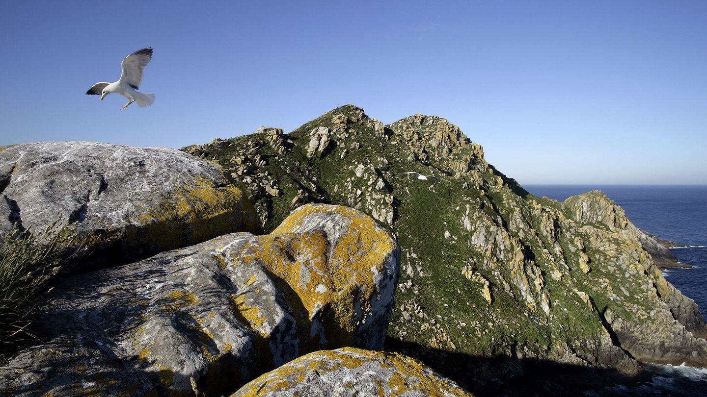 Acantilados y cortados rocosos poblados de gaviotas. (Andoni Canela)