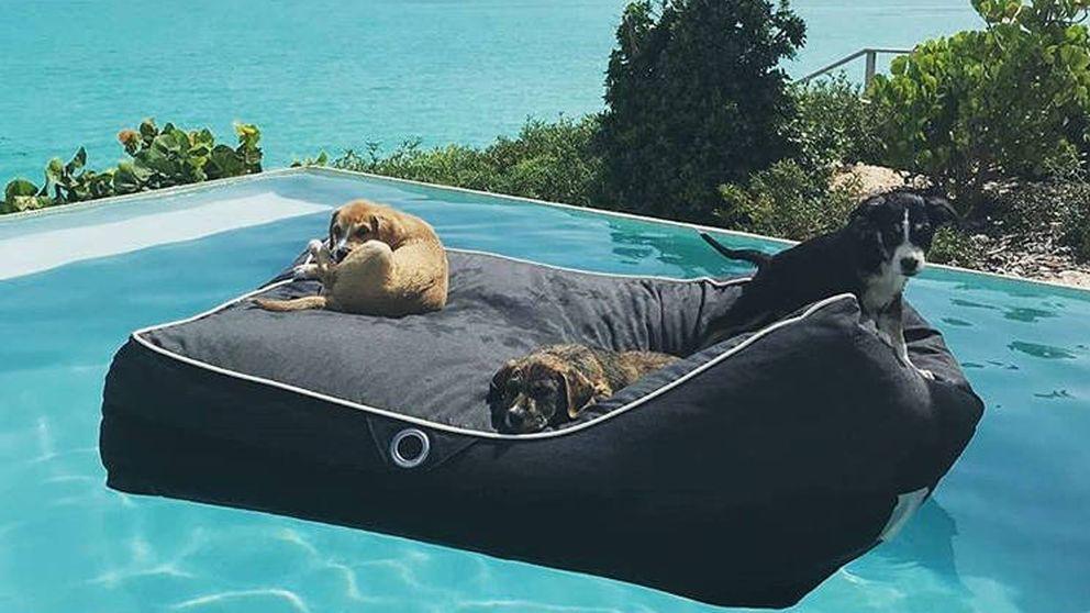 La isla  del Caribe donde puedes pasar el día jugando con perros rescatados