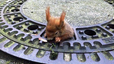 Al rescate de una ardilla atrapada