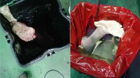 Retirar piernas amputadas o el colchón del ébola como si fueran recogedores de cartón
