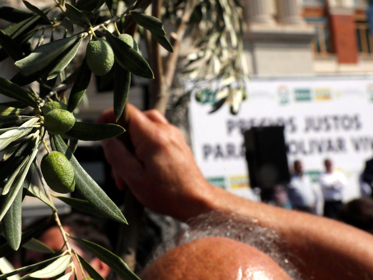 Foto: El sector del olivar español sale a la calle