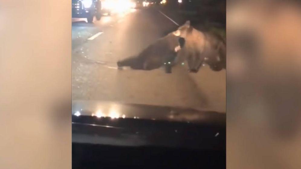 Foto: Uno de los osos consigue arrastrar al osezno fuera de la carretera y alejarlo del peligro (Foto: YouTube)