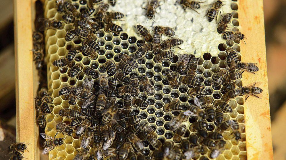 Foto: Granja de abejas. (EFE)