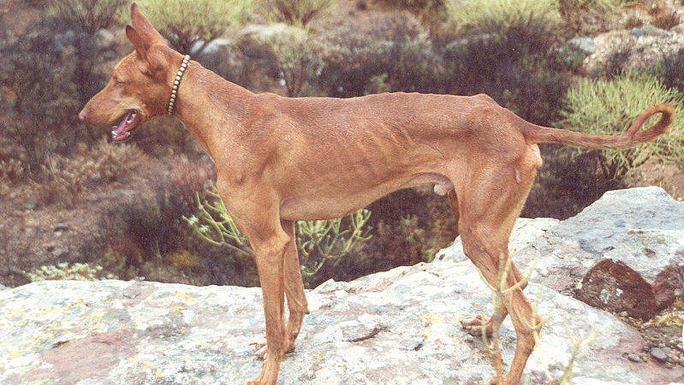 Investigan a un hombre que abandonó a su perra y murió envenenada en La Palma
