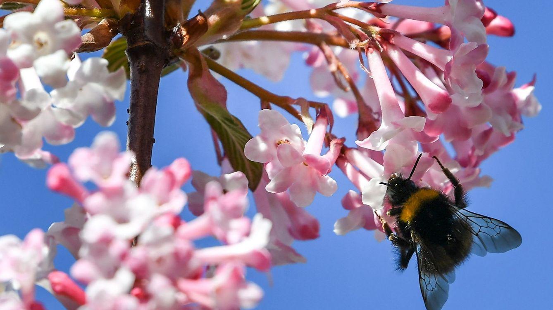 Mucho cuidado con estos insecticidas: pueden matar al insecto que no deben
