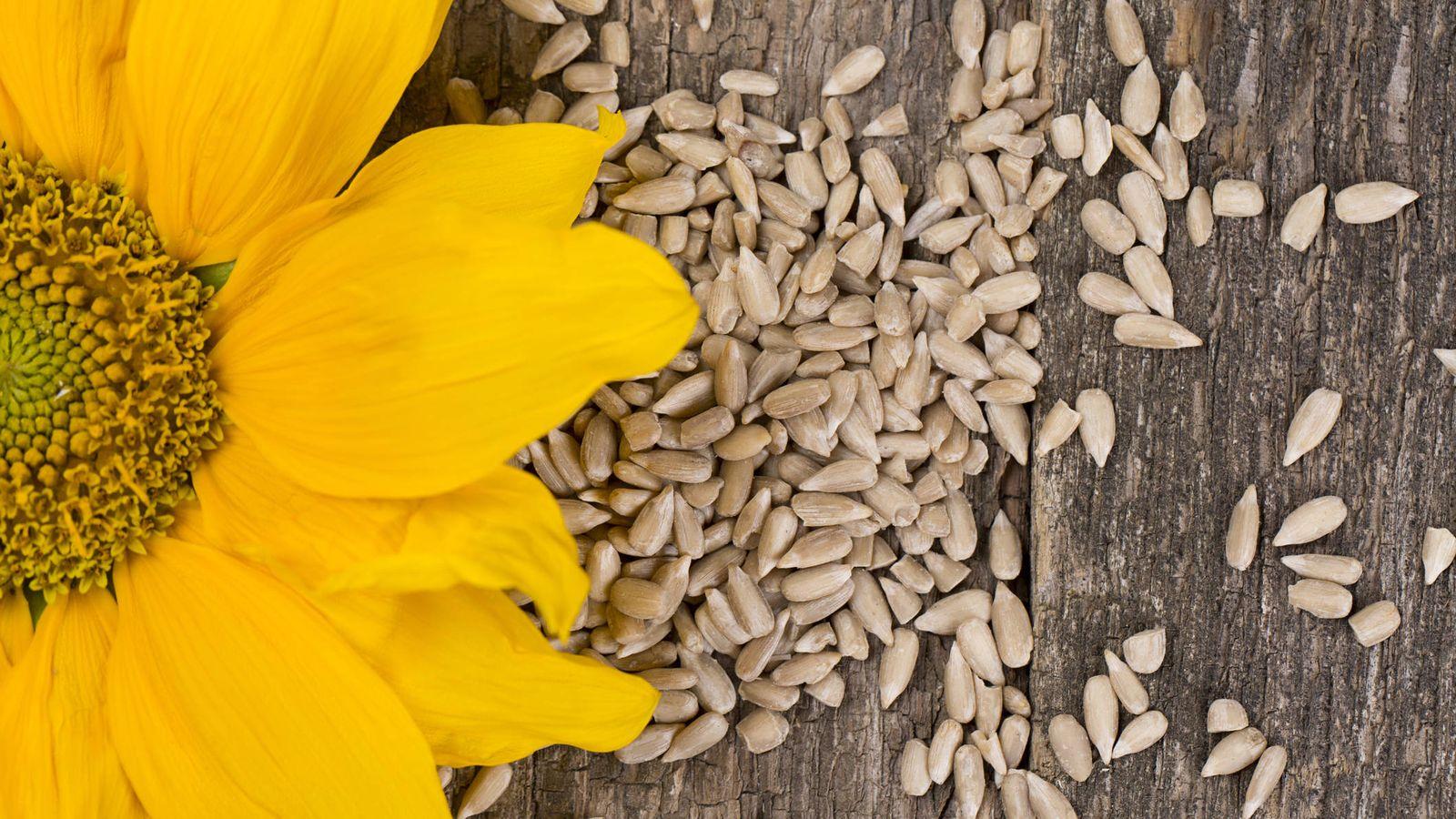 Foto: Semillas de girasol. (iStock)