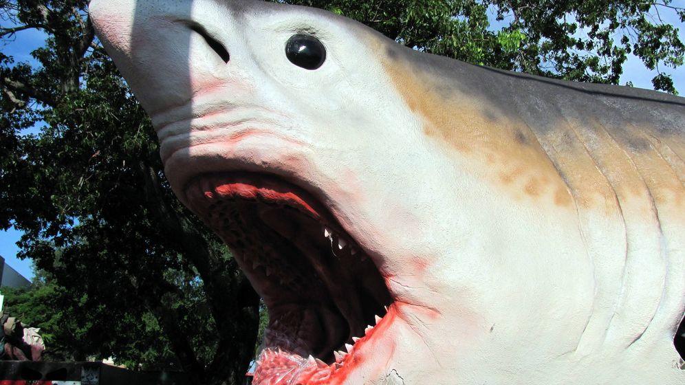 Foto: Maqueta de un tiburón prehistórico gigante. Foto: EFE