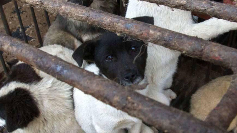 Foto: Igualdad Animal.