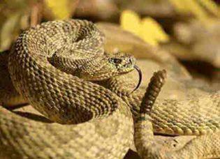 Foto: ¡Ojo con las mordeduras de serpiente en verano!