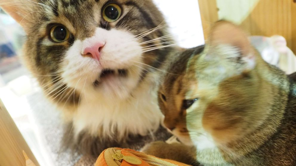 """""""Este no es lugar para gatos"""": un pueblo de Nueva Zelanda quiere prohibirlos"""