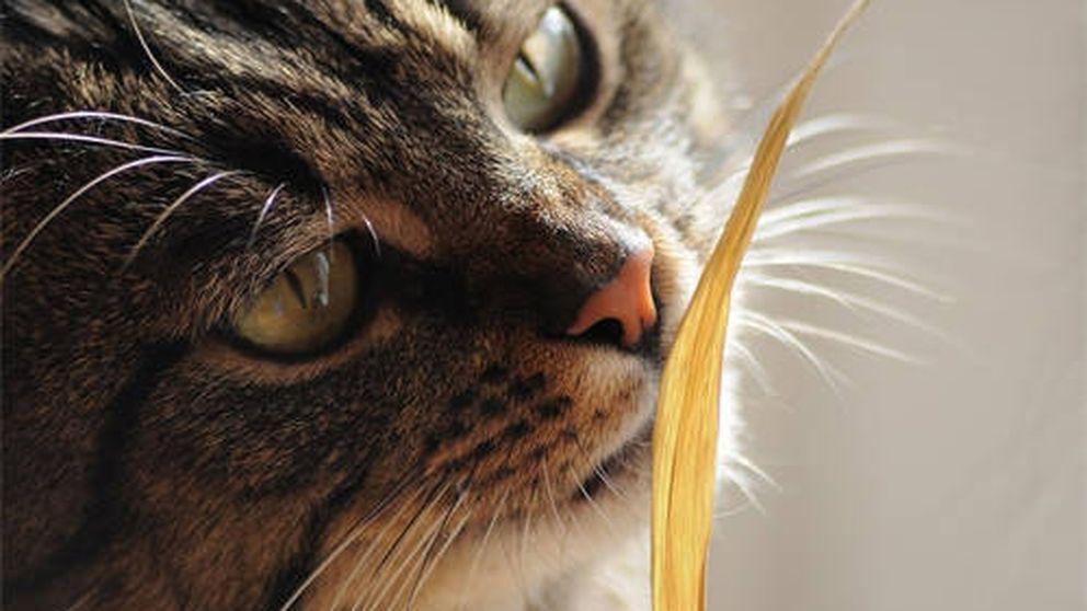 Los gatos nos dicen cosas con sus caras… lo que pasa es que no les entendemos