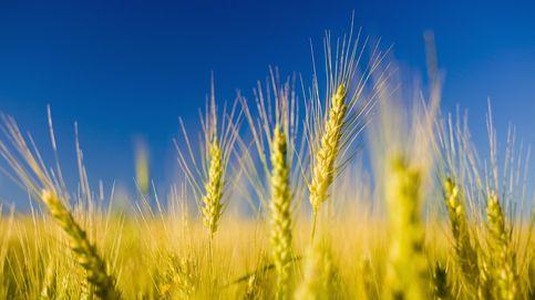 Hay una dieta común que  provoca deficiencias de proteínas, hierro y calcio