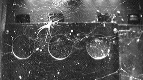 Las arañas tienen un truco para compensar la falta de gravedad