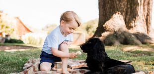 Post de La 'otra' familia de los Cambridge que no conoces: sus mascotas