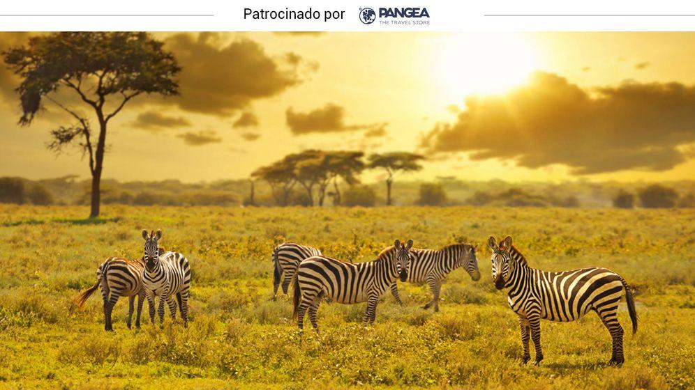 Foto: Cebras en la sabana de Kenia