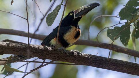Más de 80 animales son liberados en Nicaragua