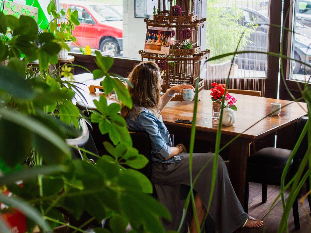 Foto: La naturaleza, protagonista en el hogar (Louis Hansel para Unsplash)