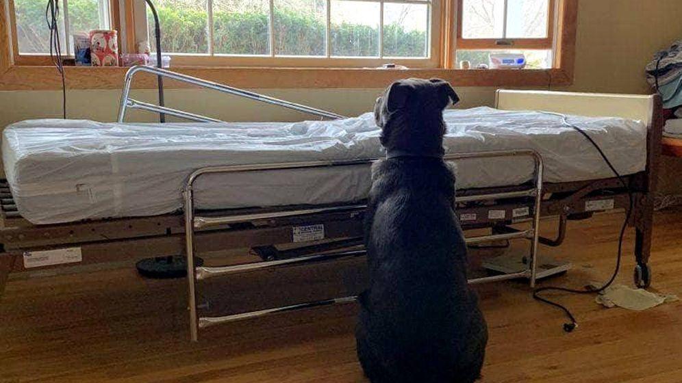 Foto: Moose, delante de la cama de Dad en el hospital (Foto: NorthStar Pet Rescue)