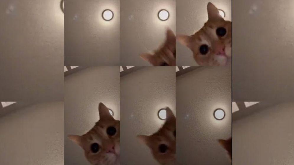 Foto: Ed se ha convertido en el gato más famoso del momento en internet (Foto: Tik Tok)