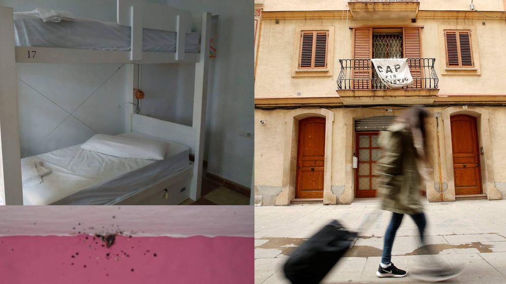 Foto: Las plagas de chinches se extienden en los bloques de viviendas de las grandes ciudades