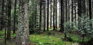 Post de El misterioso anillo prehistórico de 25 metros encontrado en el Bosque de Dean