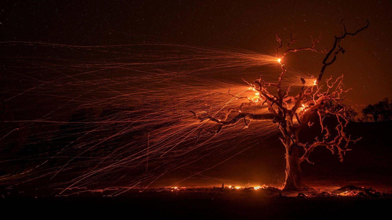 Un roble es devorado por las llamas cerca de Windsor, California (EFE)