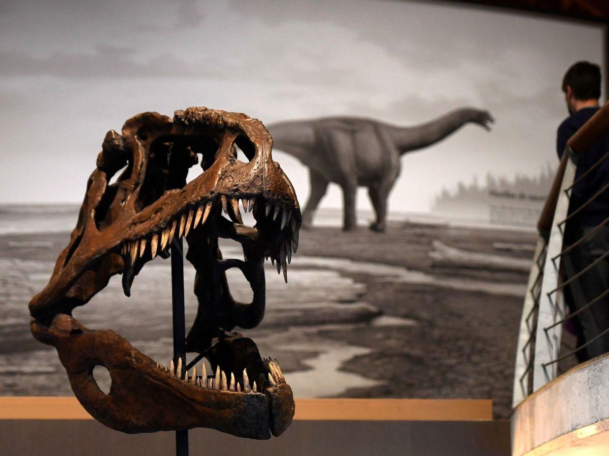 Foto: Restos de dinosaurios en el Museo del Jurásico de Asturias. (EFE)