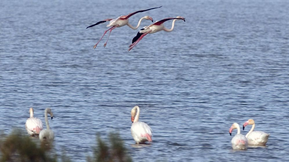 Foto: El Parque Nacional de Doñana, un tesoro medioambiental asolado por los incendios (EFE)