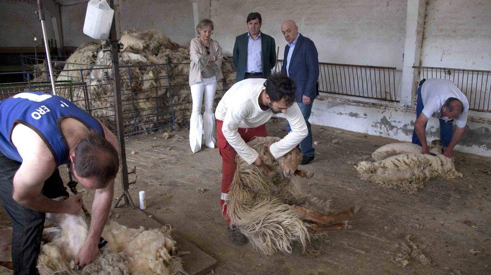 Foto: Ganaderos de Madrid esquilando ovejas. (Comunidad de Madrid)