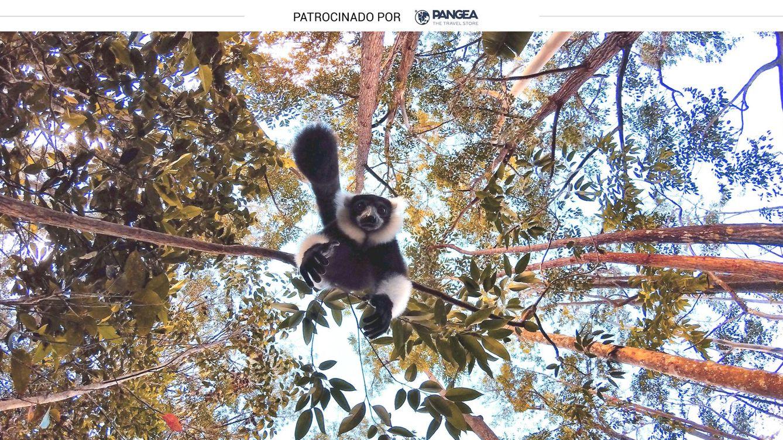 Madagascar: el país de los lémures y la naturaleza por doquier