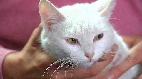 Misi, la gata que salvó de un incendio a una familia con sus maullidos