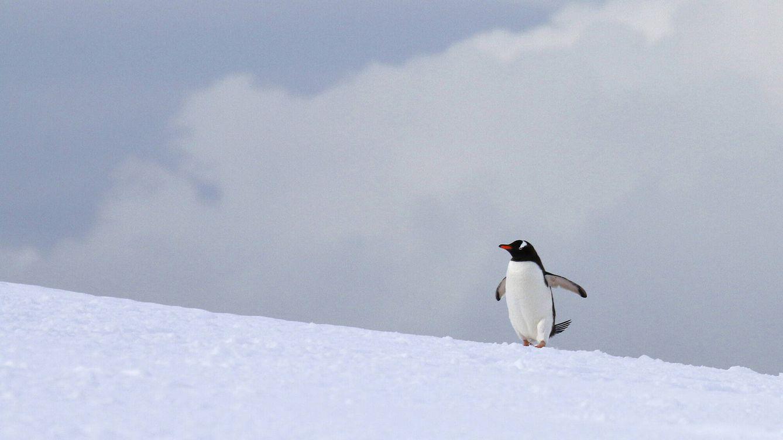 Estampas antárticas, antes de fundir a negro