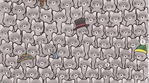 Acertijo viral: ¿eres capaz de encontrar el gato entre los mapaches?