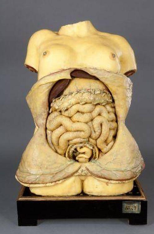 Arte: Y el hombre se hizo carne: arte, ciencia y anatomía
