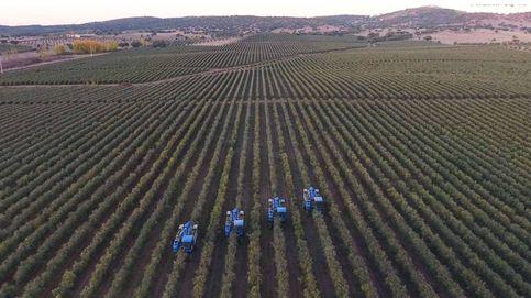 Divorcio millonario en el aceite de oliva: Atitlan y Sovena se reparten las tierras