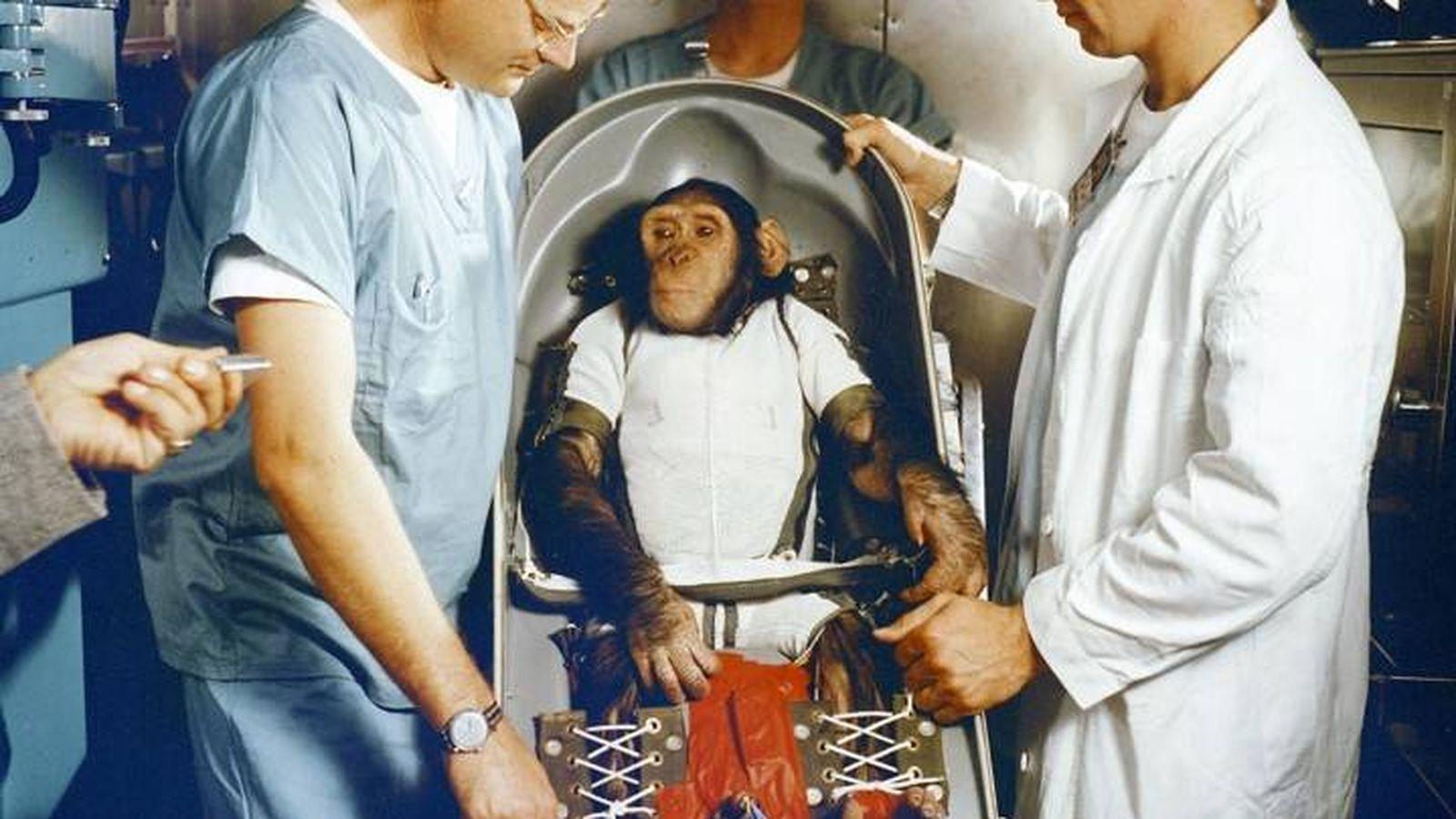 Foto: Ham el chimpancé (1961). (Foto: Nasa)