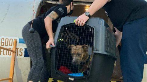 Un avión lleva de Luisiana a California a 60 perros y gatos para salvarlos de Ida