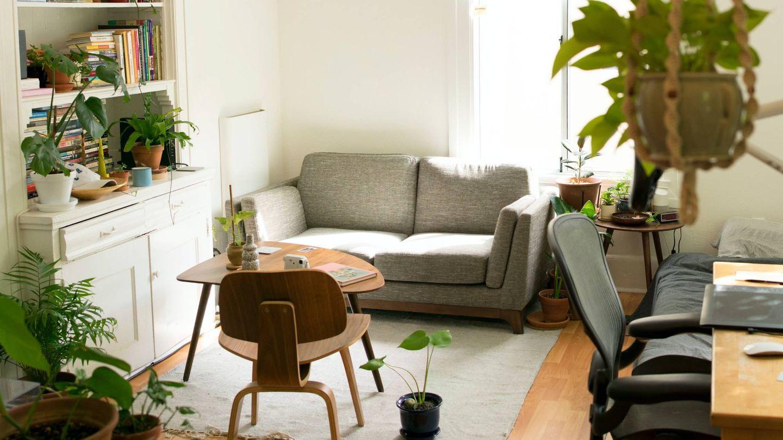 Plantas para atraer la energía positiva en casa. (Patrick Perkins para Unsplash)