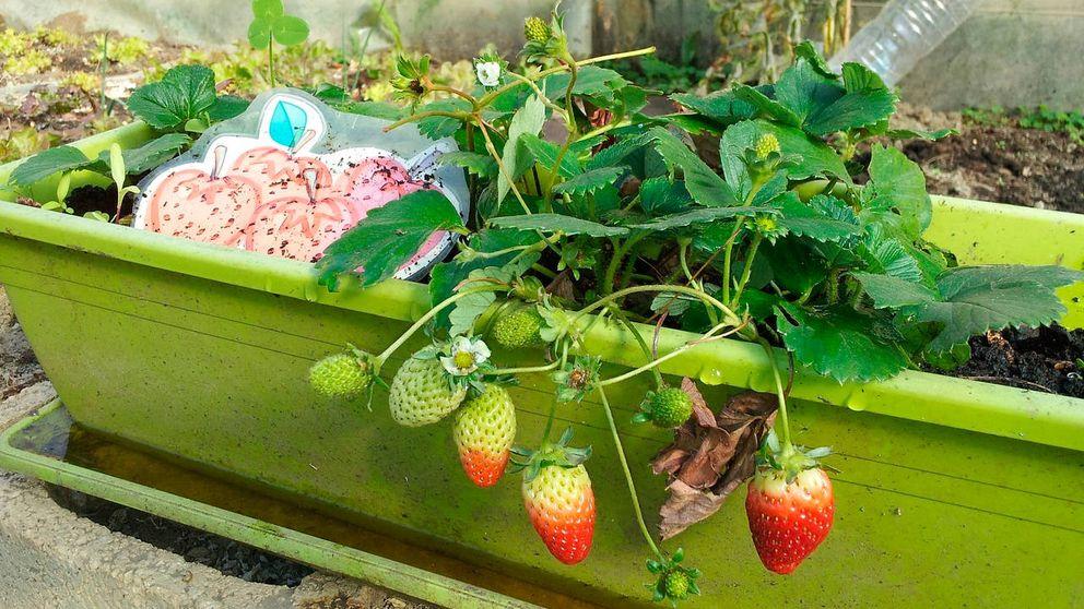 Huertos urbanos para cultivar verduras, frutas y hortalizas en tu propia casa