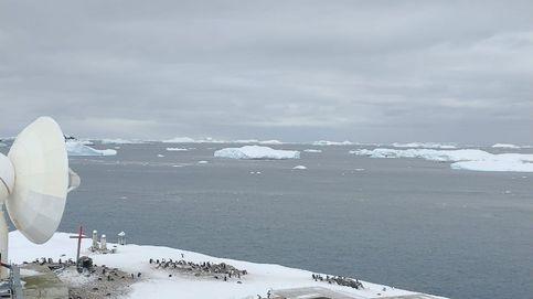 El coronavirus llega al fin del mundo: se registra un brote de 36 casos en la Antártida
