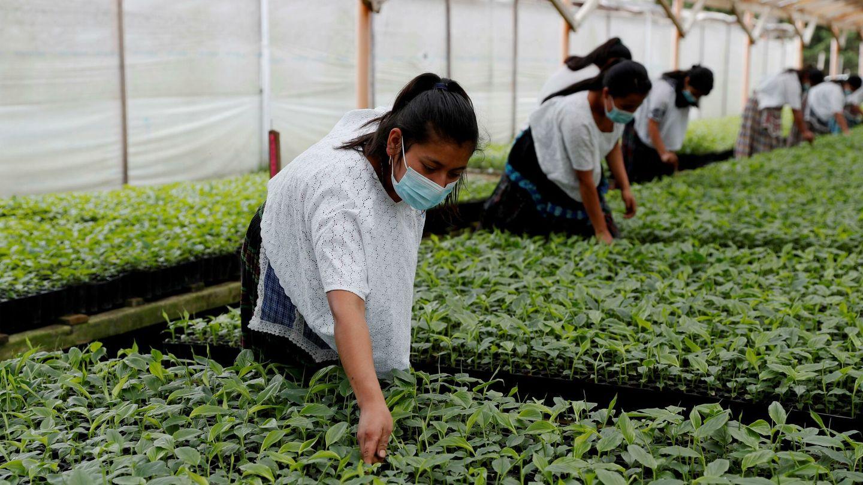 Huerto orgánico en Guatemala. EFE