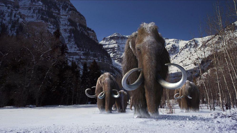 Foto: Los mamuts se extinguieron por un problema metabólico