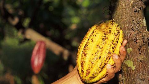 Este es el viaje que hace el cacao de ColaCao desde el trópico