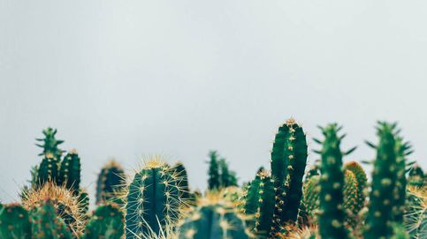 Da un aire exótico y colorido a tu casa con decoración de cactus