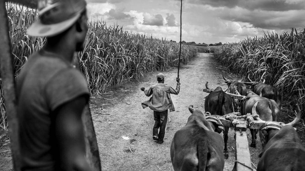 Foto: Cortadores de caña de azúcar en los bateyes de la provincia de San Pedro de Macorís, donde muchos de los desplazados haitianos van a trabajar en la temporada de la caña de azucar. (Foto: Javier Arcenillas)