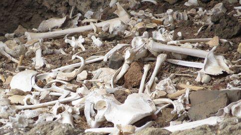 El sueño arqueológico canario: encuentran intacta una cueva funeraria prehispánica