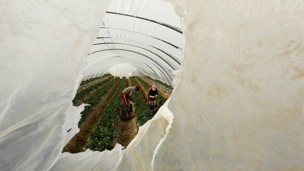 Foto: Trabajadoras inmigrantes en los campos de fresas de Rociana, Huelva, en 2009. (Reuters)